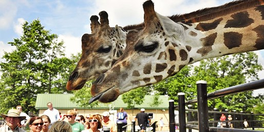 $16 -- Safari Niagara Day Pass feat. 750+ Animals, Reg. $25