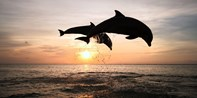 $20 -- Dolphin & Manatee Sightseeing Cruise for 2, 55% Off
