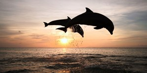 $26 -- Dolphin & Manatee Sightseeing Cruise for 2, 55% Off