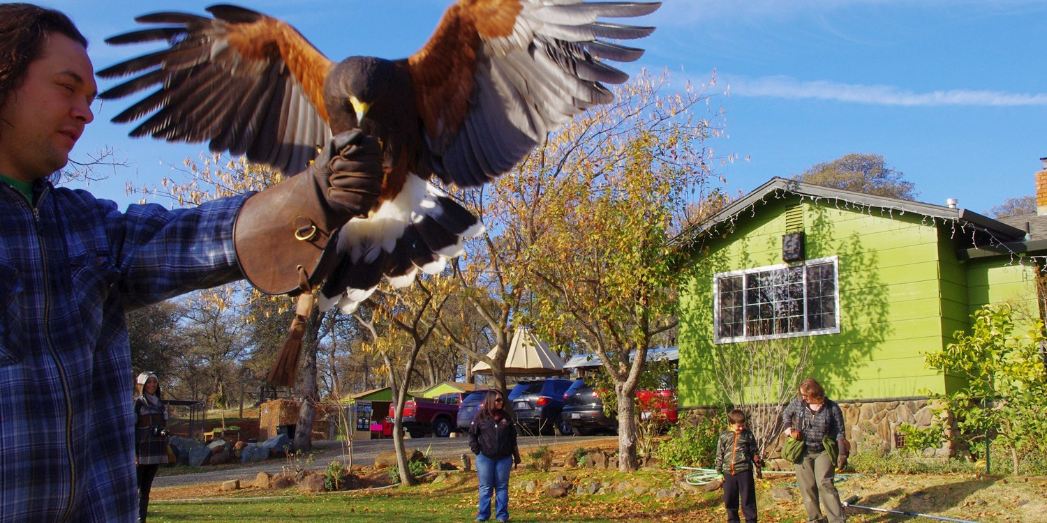 $35 -- Hands-On Falconry Experience, Reg. $70