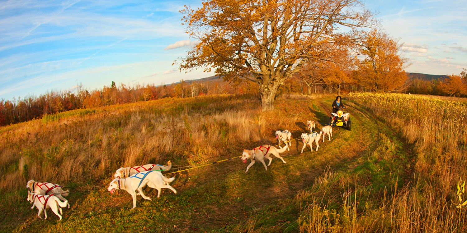 $99 -- Dog Mushing Adventure w/Husky Racing Team This Fall
