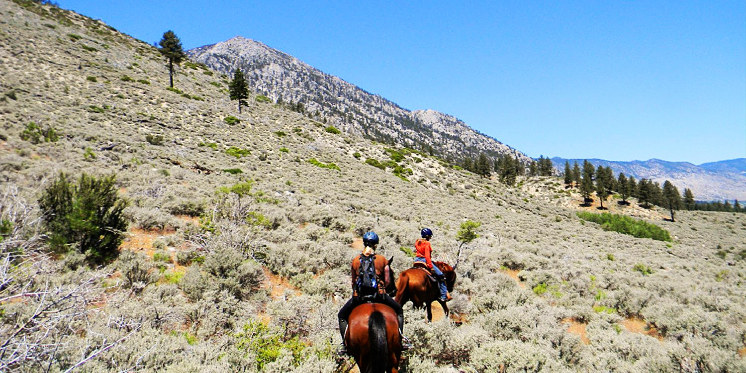 $39 -- Tahoe: Scenic Horseback Trail Ride for 2, Reg. $80