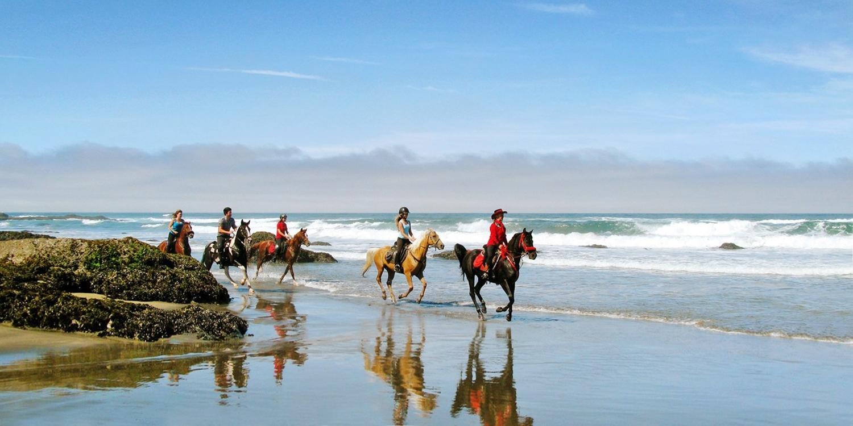 $35 -- Ride Horseback Along Mendocino Coast to the Beach