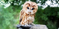 £19 -- 60-Minute Owl-Handling Experience, 53% Off