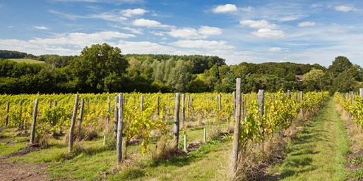 £29 -- Sussex Vineyard: Tour, Tasting & Lunch for 2, 41% Off