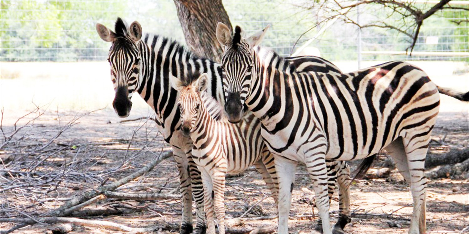 Dallas: $10 -- Zebras, Emus & Kangaroos: Wildlife Day for 2, 50% Off