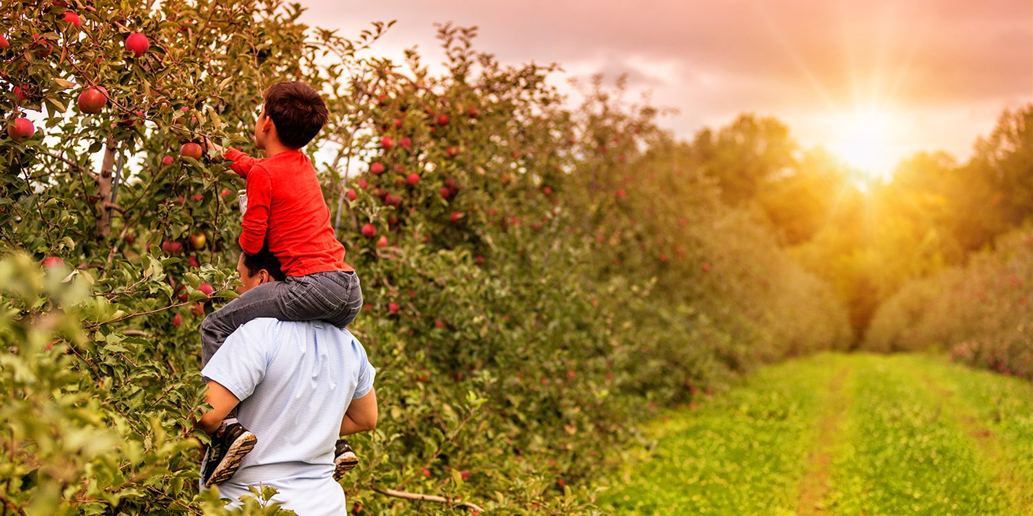 Apple Picking & Corn Maze All-Day Pass, from $14