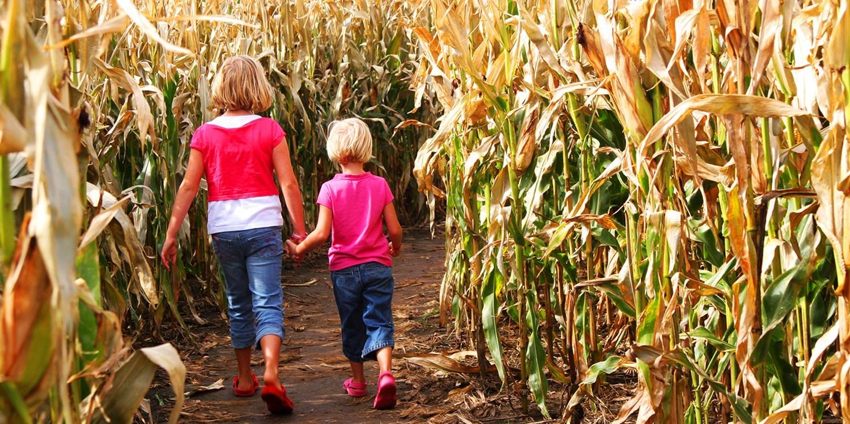 $15 -- Corn Maze: Family Pass, Reg. $32
