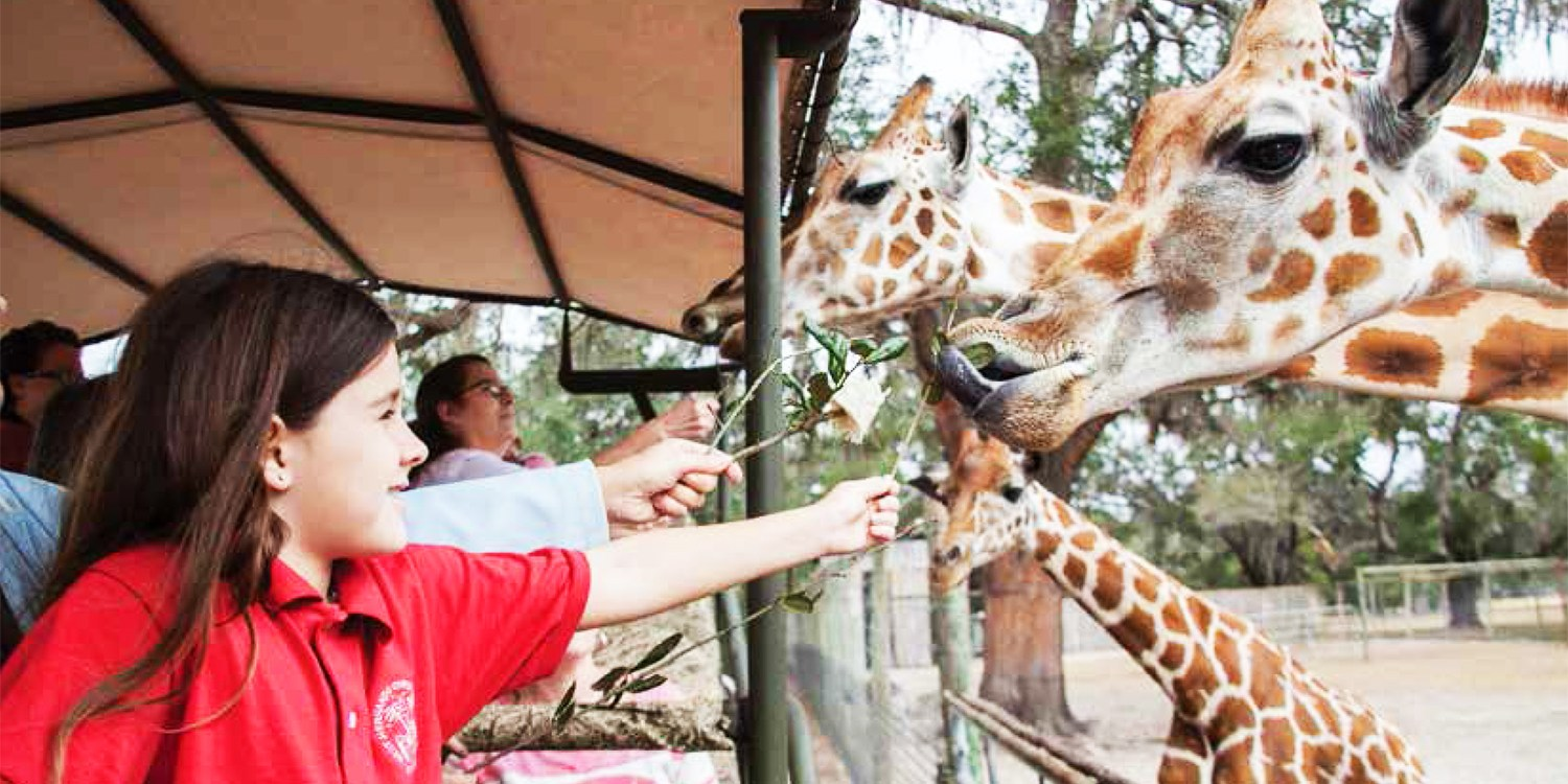 $139 -- Guided Camelback Safari w/Rhino & Lemur Feeding