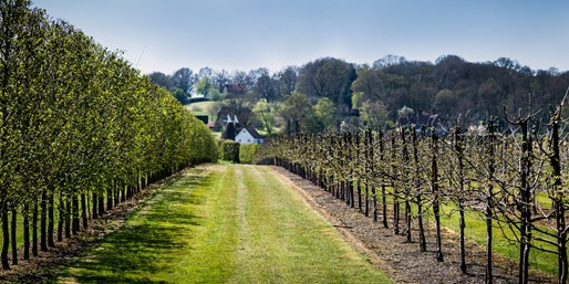 £29 -- Tour of Award-Winning Winery & Lunch for 2, Was £55
