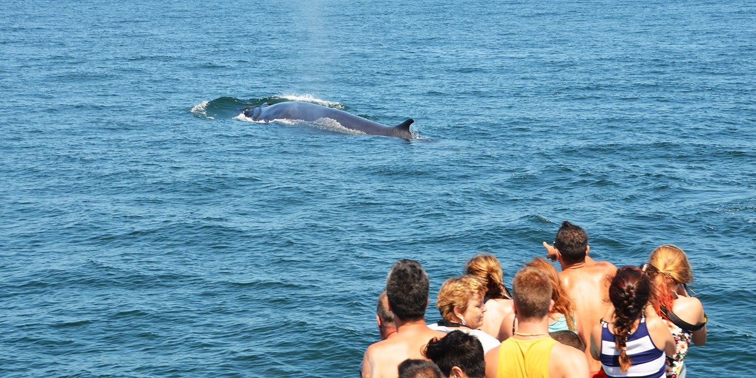 $24 -- Whale-Watching Cruise through Summer, Reg. $43
