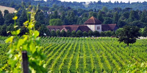 £16 -- Food & Wine Tasting for 2 at Surrey Vineyard, 52% Off