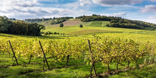 £9 -- Surrey Vineyard Train Tour w/Bubbly for 2, 57% Off