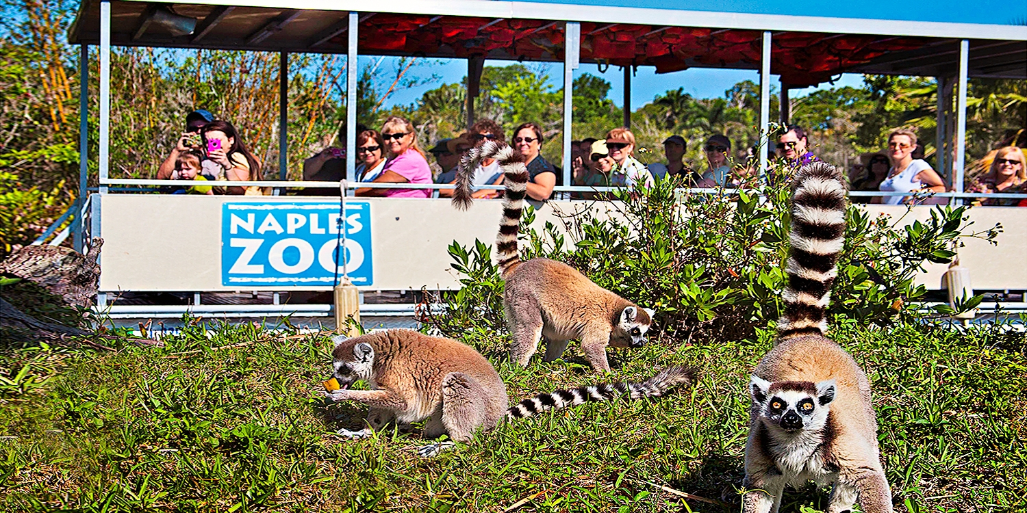 $24 & up -- Naples Zoo: 1-Year Individual or Family Pass