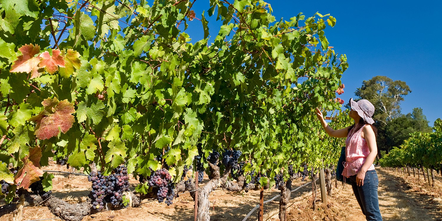 $29 -- Willamette Valley: 15-Location Winery Passport for 2