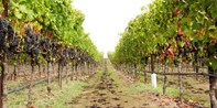 $29 -- Napa Wine Passport for 2: Visit 25+ Locations