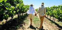 ¥89 -- 4.9折 Pembrokeshire:品尝葡萄酒+芝士双人游 漫步葡萄园