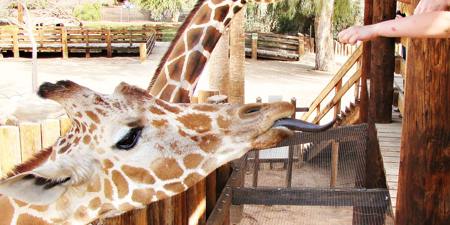 $10 & up -- Wildlife World Zoo & Aquarium Admission