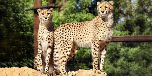 $12 & up -- Wildlife World Zoo: Admission thru Winter