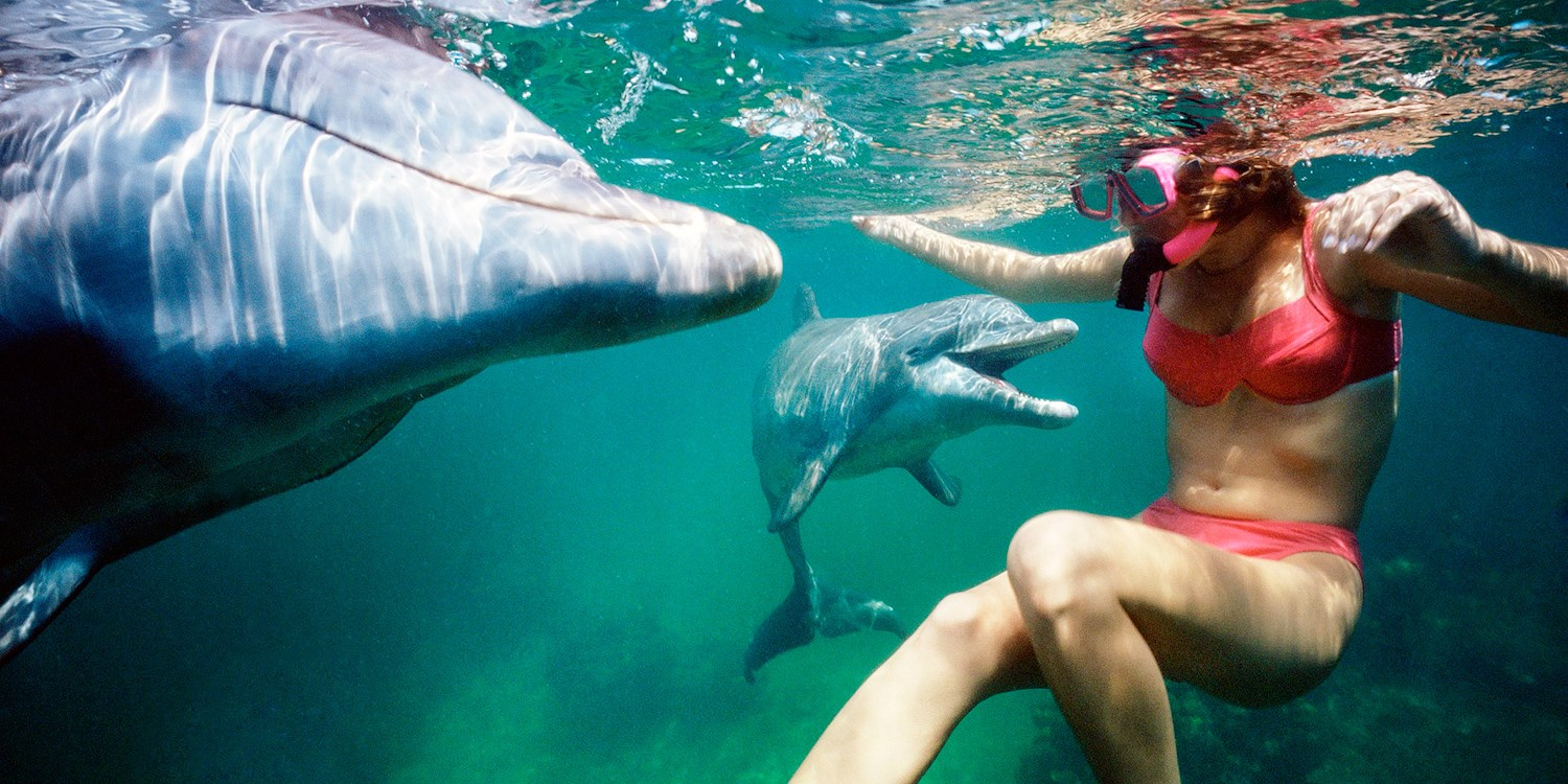 $40 -- Dolphin & Manatee Swim or Fishing for 2, Save 50%