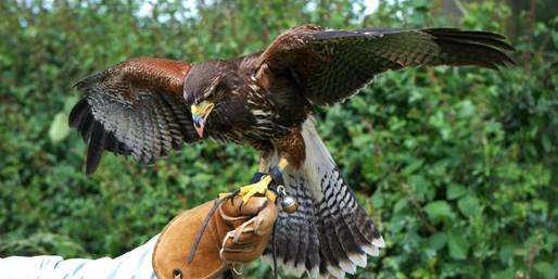 £25 -- Shrewsbury: 2-Hour Birds of Prey Experience, 68% Off