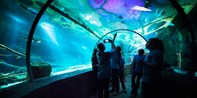 $17-$20 -- SEA LIFE Aquarium at Mall of America, 25% Off