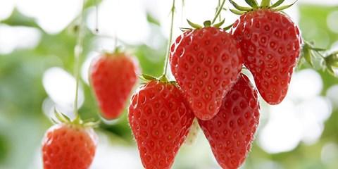 25€ -- Tokyo : Expo, cueillette de fraises & déjeuner Coréen