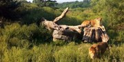 $7 -- Jungle Cat World Wildlife Park Admission, Half Off