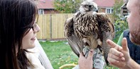 $25 -- 1 Hour Falconry Workshop in Bowmanville