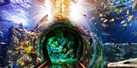 $18-$23  -- SEA LIFE Aquarium in Grapevine, Save 25%