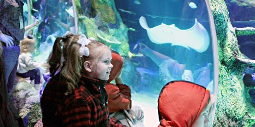 $14-$17 -- SEA LIFE Aquarium Admission, Save 20%