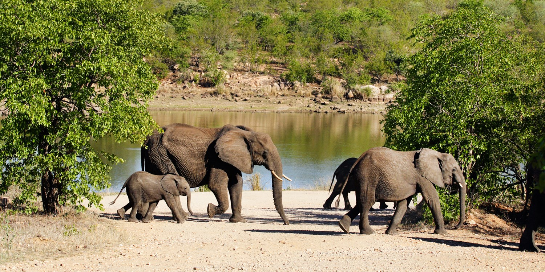 Sabie River Bush Lodge -- Kruger Park South, South Africa