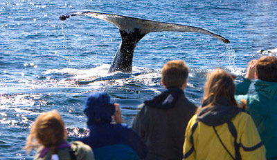 $29 - Gray Whale Watching for 2 in Peak Season, Reg. $60