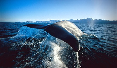$29 -- Blue Whale-Watching Cruise for 2 w/Drinks, Reg. $72