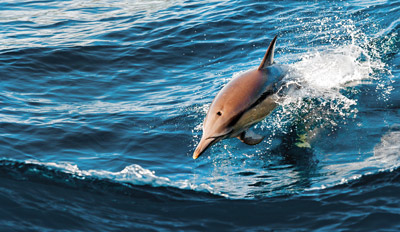 $20 - Cape May: Last Chance Whale- & Dolphin-Watching Cruise