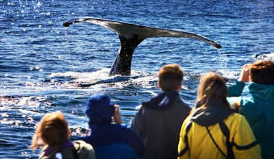 $22 -- Blue Whale Watching Trip from Mission Bay, Half Off
