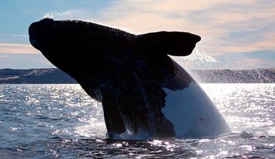 $69 - Whale-Watching Trip to the Coronado Islands, Reg. $195