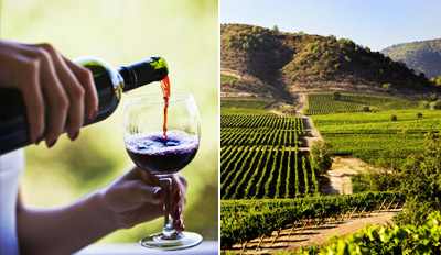 $69 - Chauffeured Santa Ynez Wine Tour w/Lunch, Reg. $159