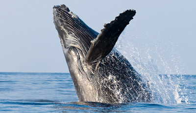 $25 - Monterey Bay: 4-Hour Whale-Watching Tour, Reg. $48