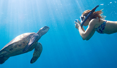 $24 - Snorkel with Sea Turtles off Waikiki, Reg. $49