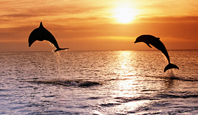 $49 -- Sunset Tour of Honolulu's Maunalua Bay, Reg. $99