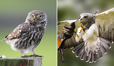 £18 -- Birds of Prey Half Day inc Handling, Reg £78