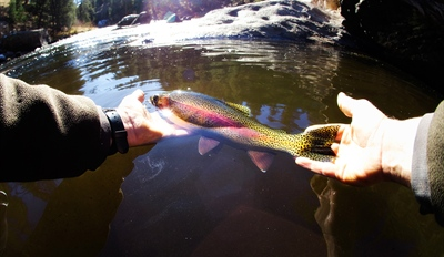 $119 - Guided Steelhead Trout Fishing Trip w/Gear, Reg. $275