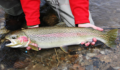 $99 - Guided Steelhead Trout Fishing Trip w/Gear, Reg. $250