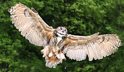 £19 - Owl or Hawk-Handling in Rural Yorkshire, Reg £45