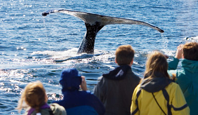 $29 - Whale-Watching Excursion for 2 w/Drinks, Reg. $70