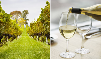 $28 - Virginia Vineyard Tour & Wine Picnic for 2, Reg. $80