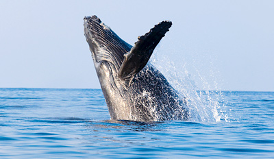 $25 - 4-Hour Whale- & Dolphin-Watching Excursion, Reg. $45