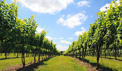 $25 - Sugarleaf Vineyards: Tour for 2 w/Tastings & 2 Bottles