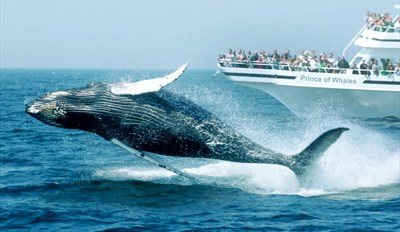 $29 -- Whale-Watching Cruise This Spring & Summer, Reg. $50